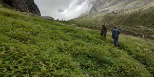 Satopanth Lake -Swargarohini Trek