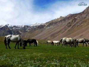 Hampta Pass Chandratal trek