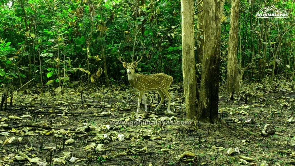 Safari in Rajaji National Park